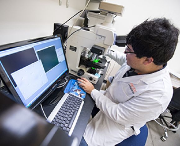 An undergraduate student studies the morphological features of proteins that form the cytoskeleton in mammalian cells.